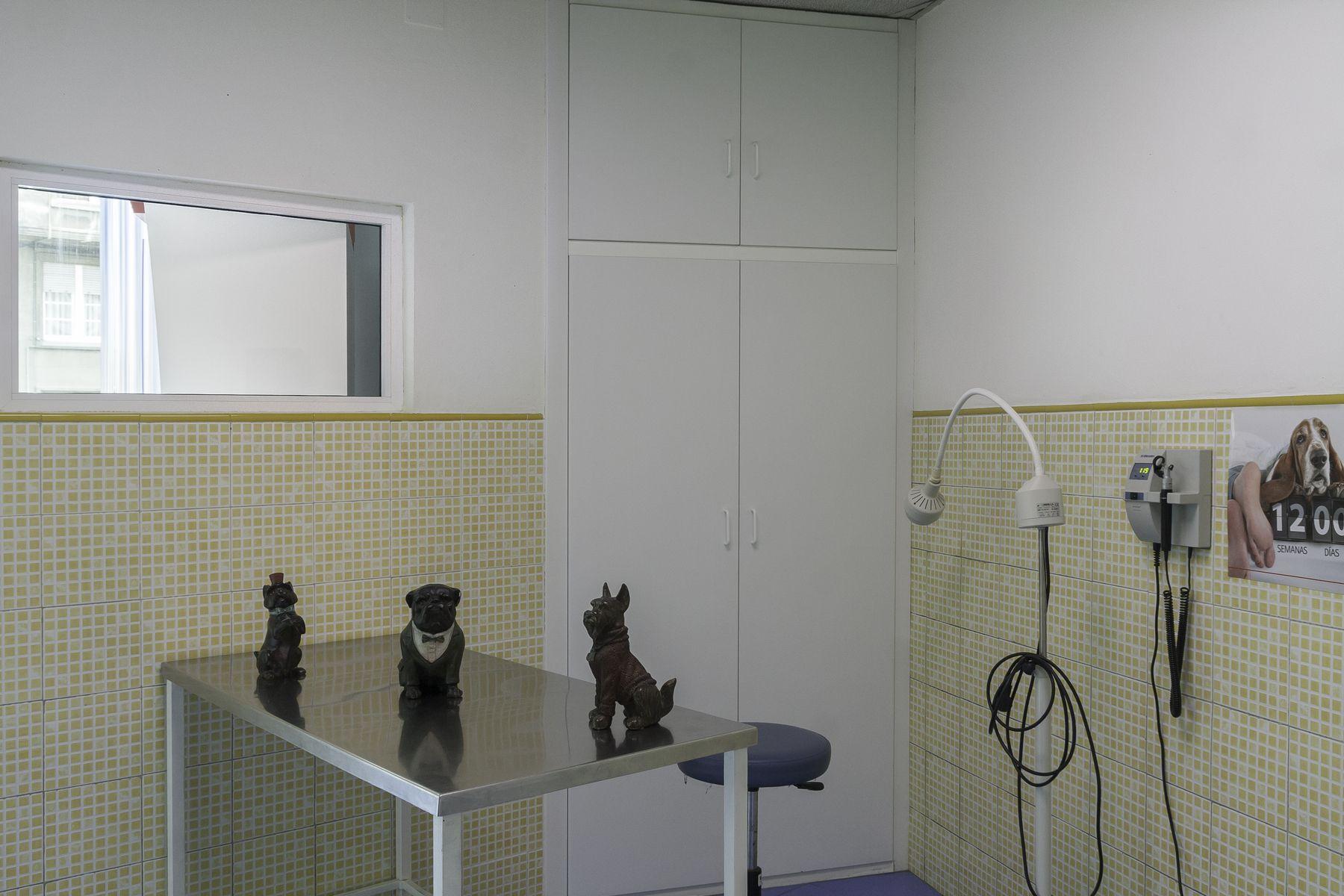 Hospitalización veterinaria en Avilés