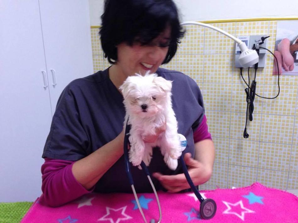 Vacunaciones: Servicios de Centro Veterinario La Villa