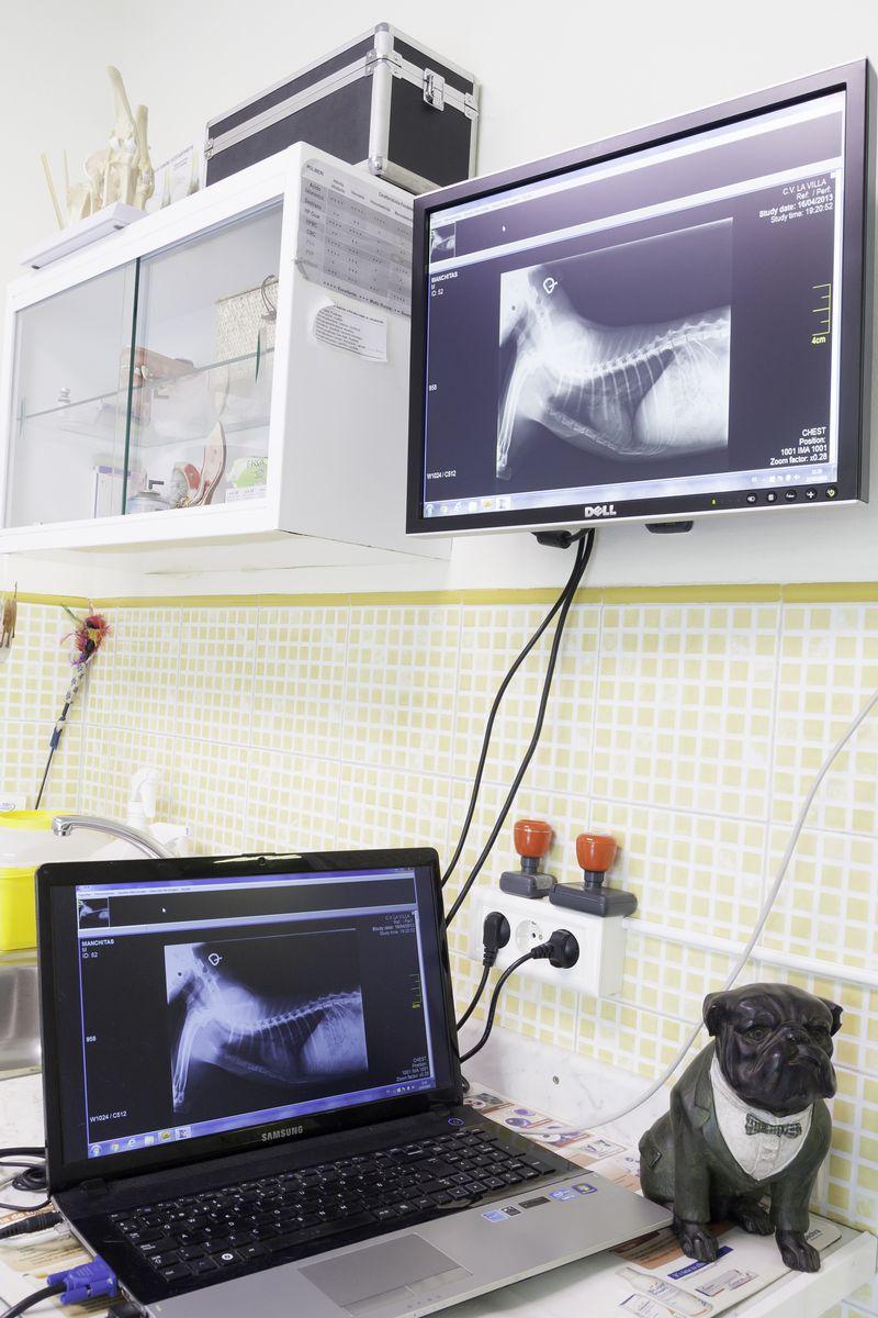 Cirugía veterinaria en Avilés