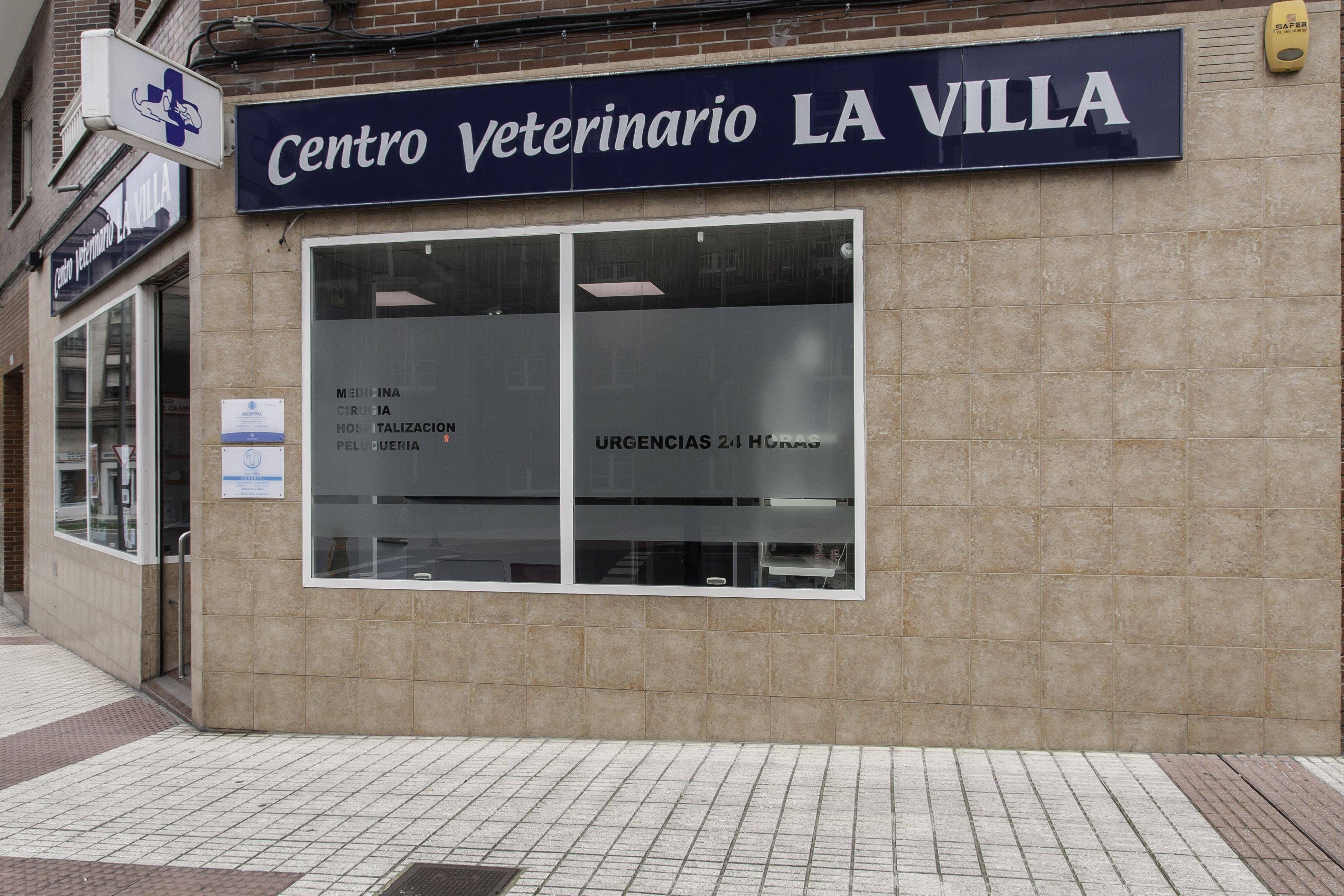 Foto 6 de Veterinarios en Avilés | Centro Veterinario La Villa