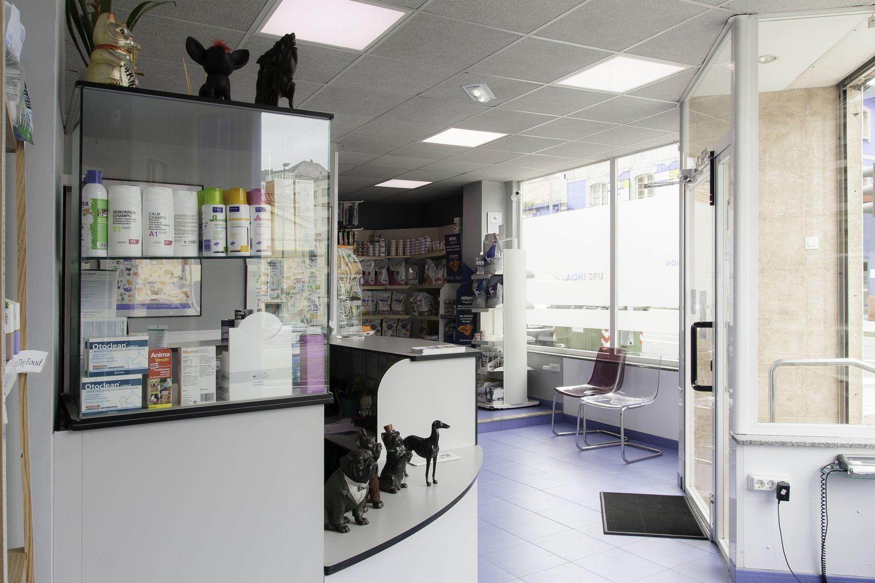 Acupuntura veterinaria en Avilés