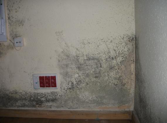 Tratamiento de moho en paredes en asturias impertec - Moho en paredes ...