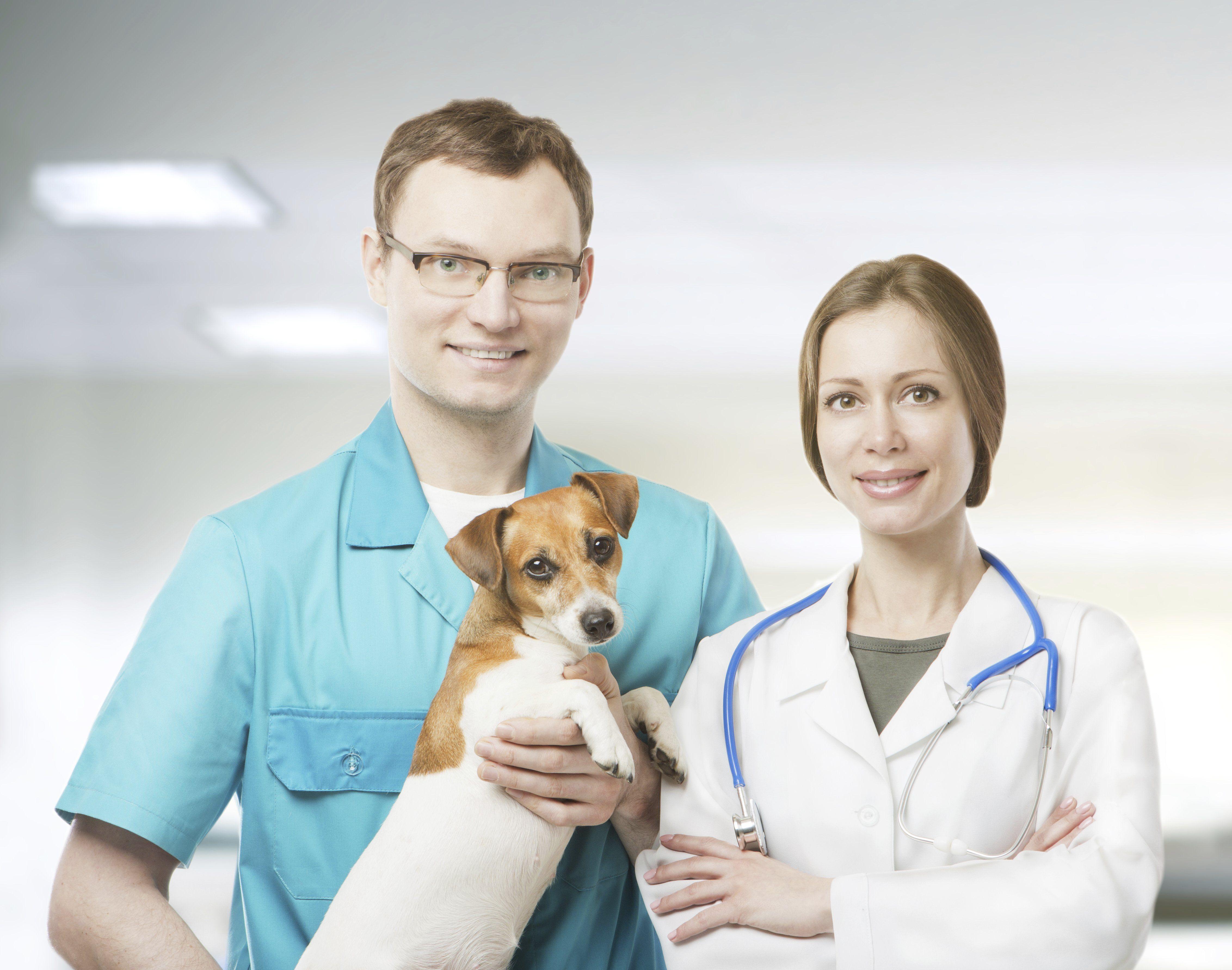 Cirugía general: Especialidades de Clínica Veterinaria Pintos C.B