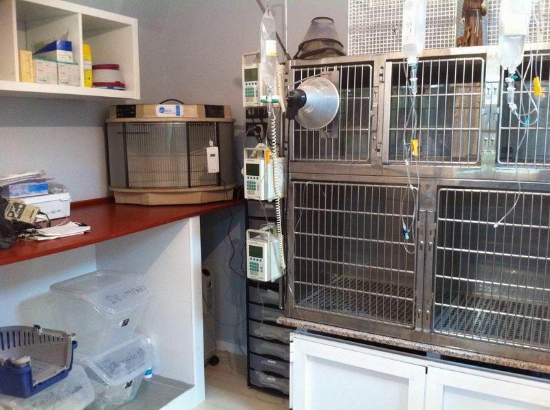 Medicina general para tu mascota en Melilla