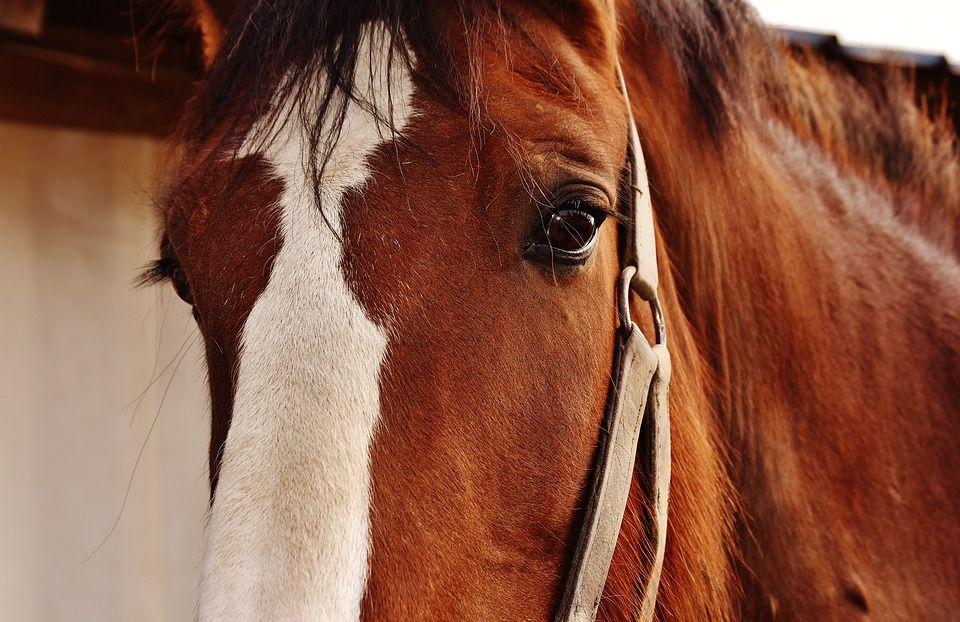 Paseos a caballo: Servicios de Escuela Hípica Los Nogales