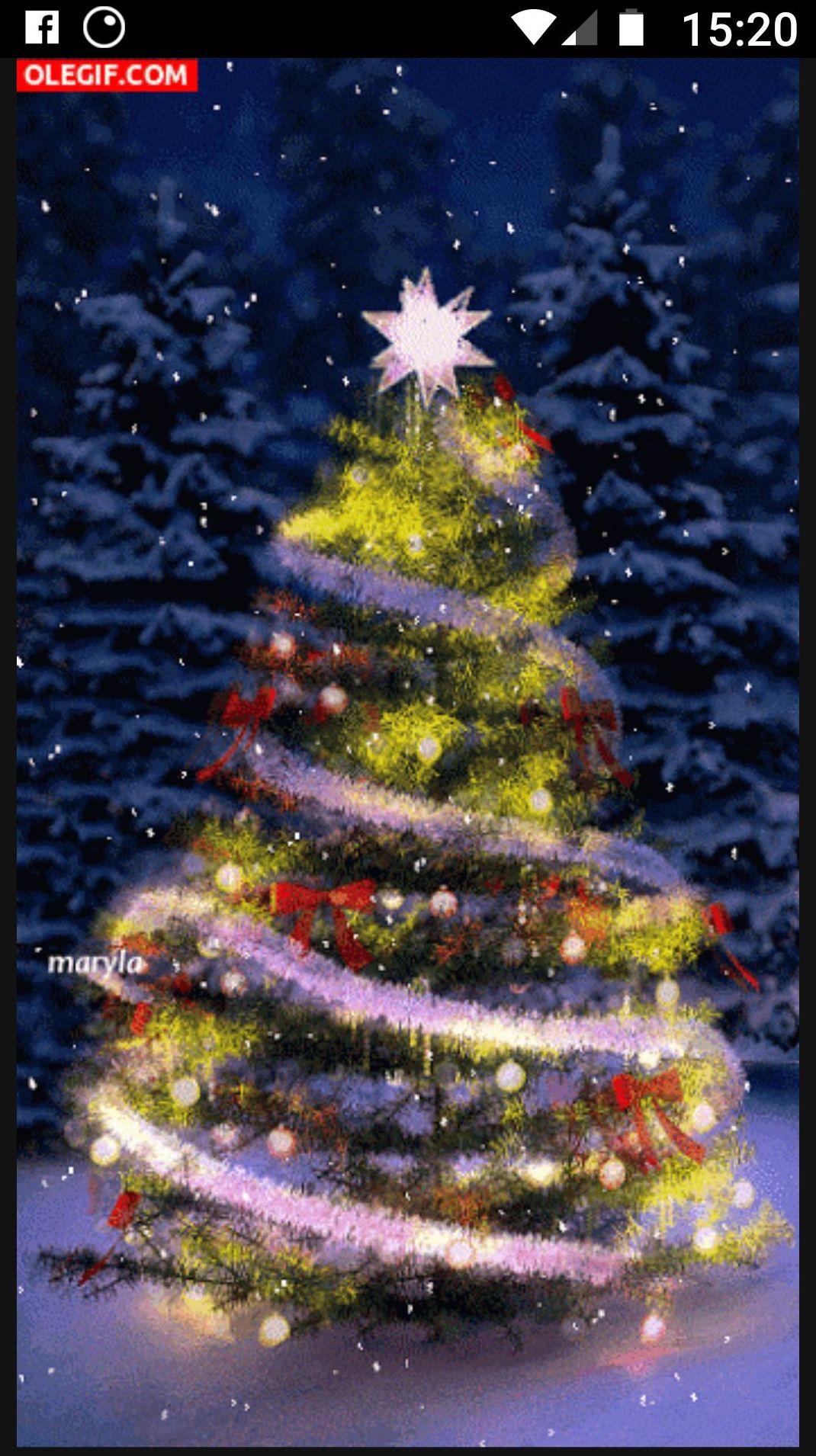 Navidad en Maloa