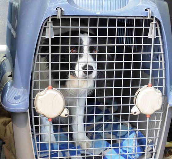 Transporte de animales de compañía: Servicios de Taxi Montblanc