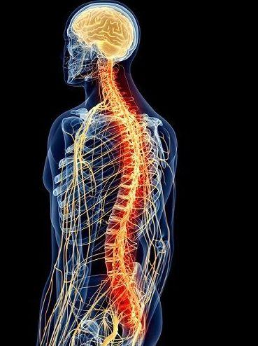 Tratamiento del sistema nervioso: Tratamientos y tarifas de Centro de Fisioterapia La Zarzuela
