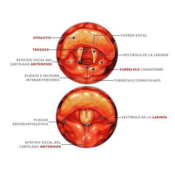 La voz: Técnicas de Clínica de Otorrinolaringología