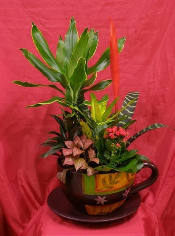 Flores y Plantas Naturales
