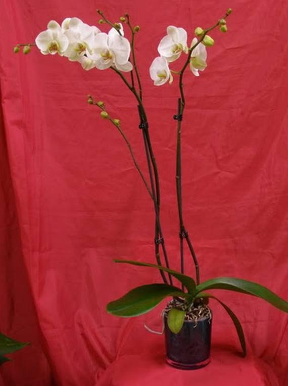 Servicio Interflora Flores Tere