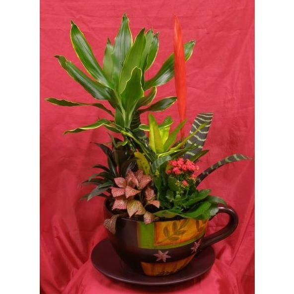 Plantas : Nuestras flores de Flores Tere