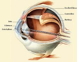 Tensión ocular: Nuestros Servicios de Óptica Line