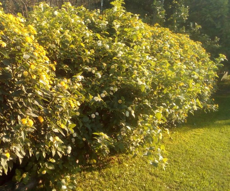 Empresa de mantenimiento de jardines en Vizcaya