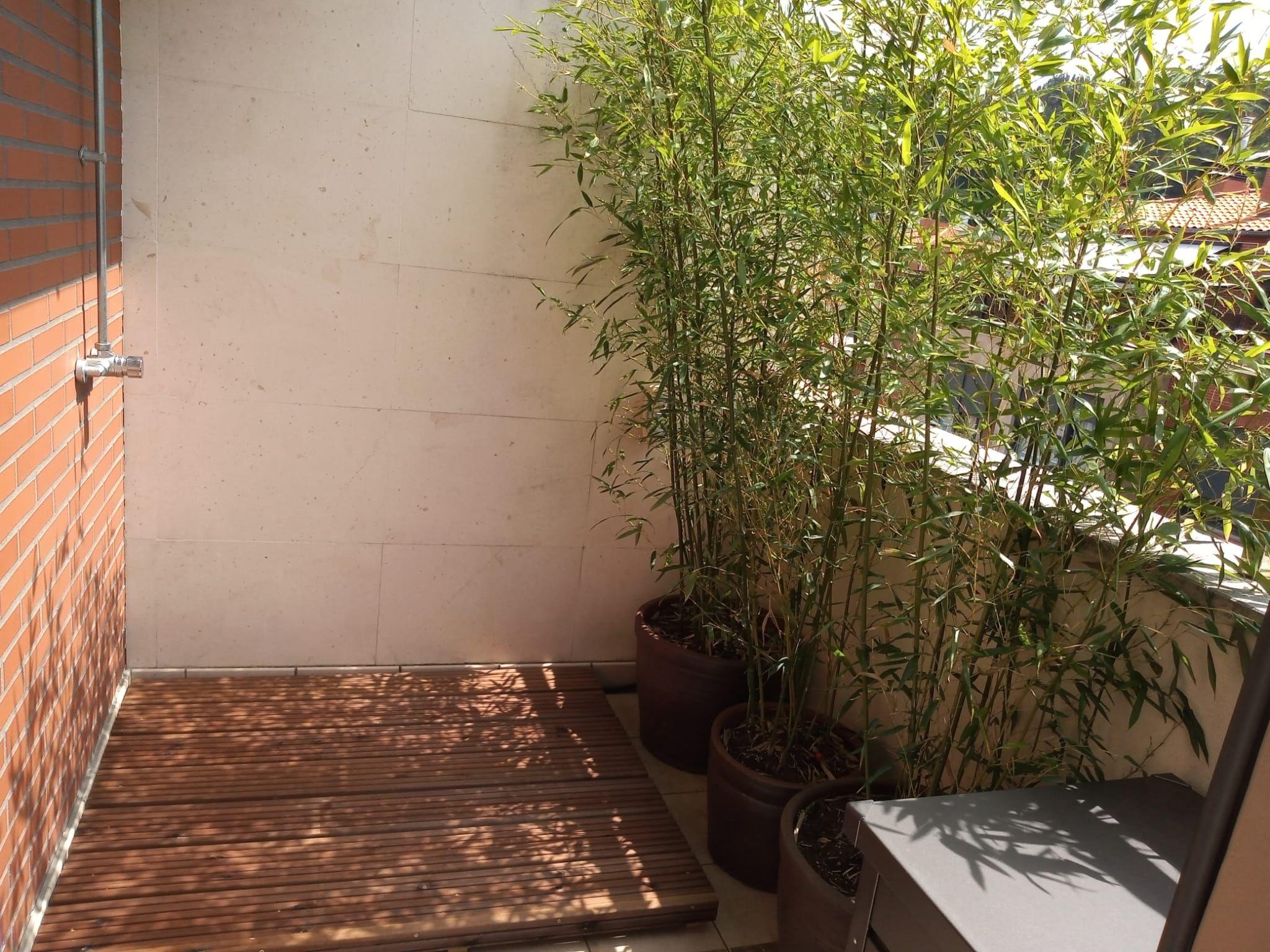 Mantenimiento jardines en Sopelana