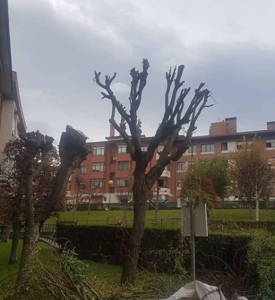 Poda de árboles en Vizcaya
