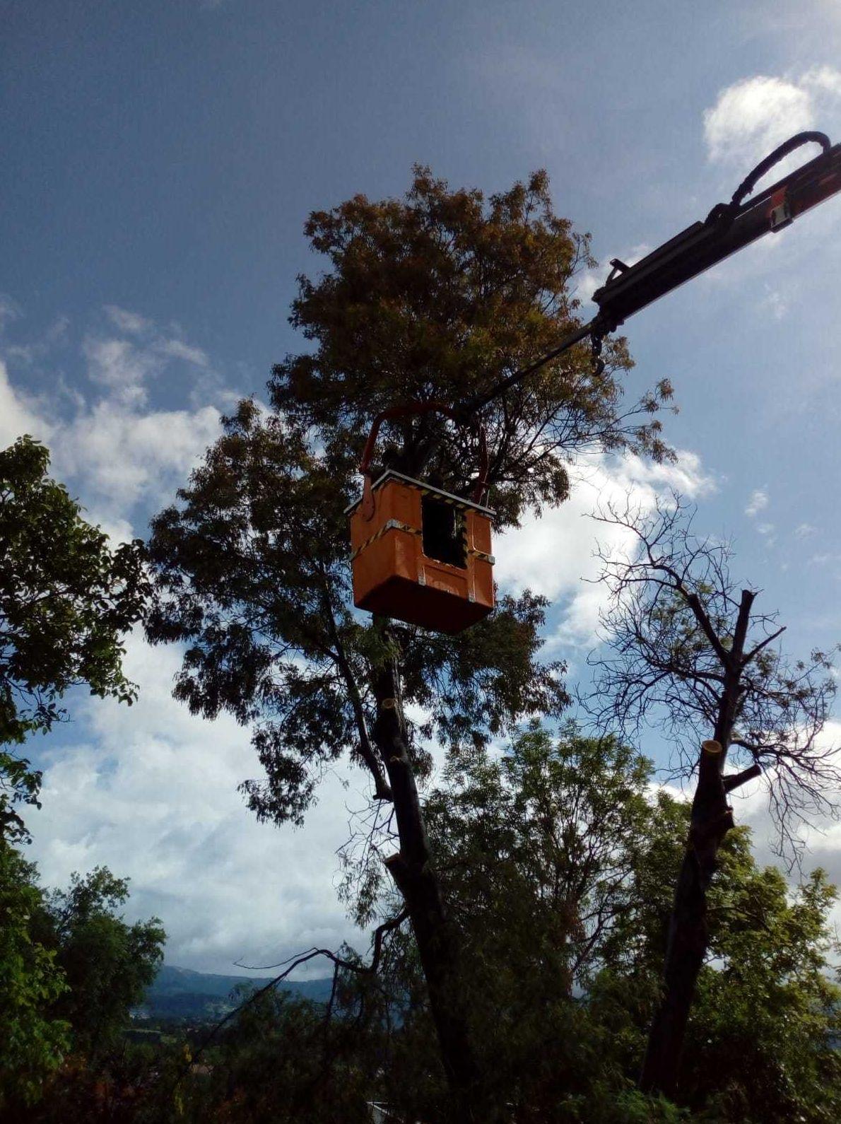 Poda de árboles en Sopelana