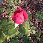 Mantenimiento de jardines en Sopelana