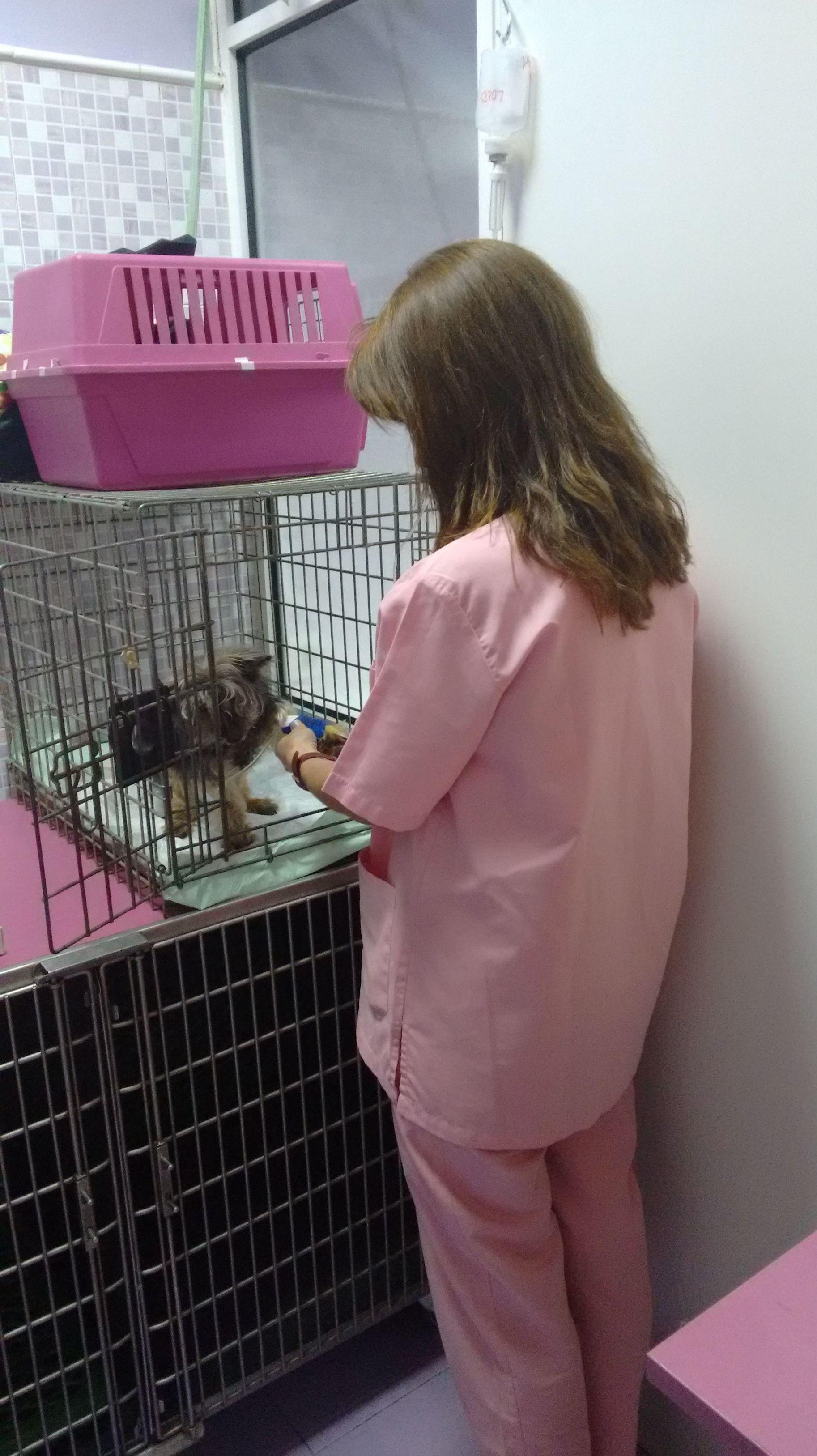 Igualas veterinarias en  Pirámides Madrid