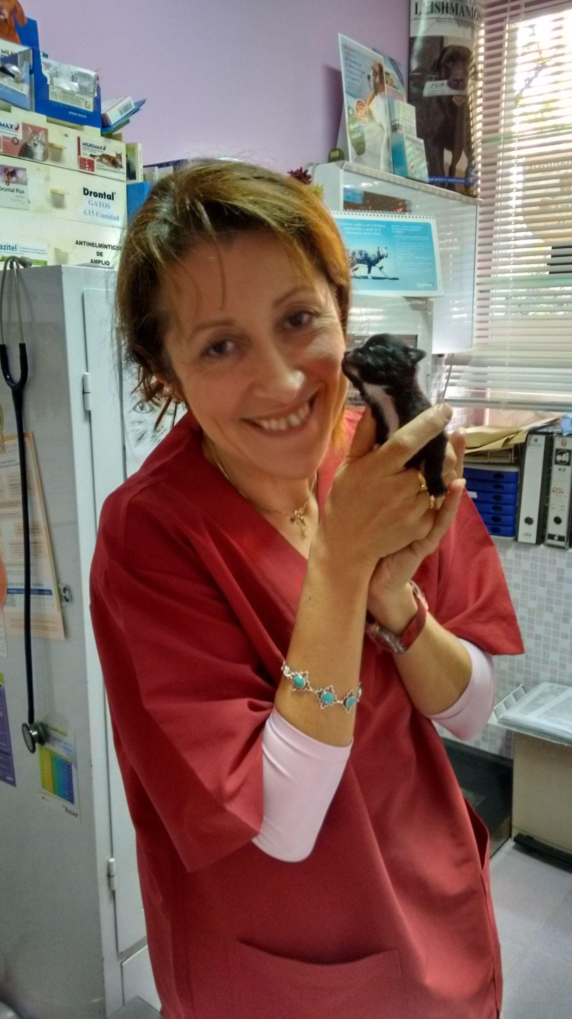 Campañas veterinarias en  Pirámides Madrid