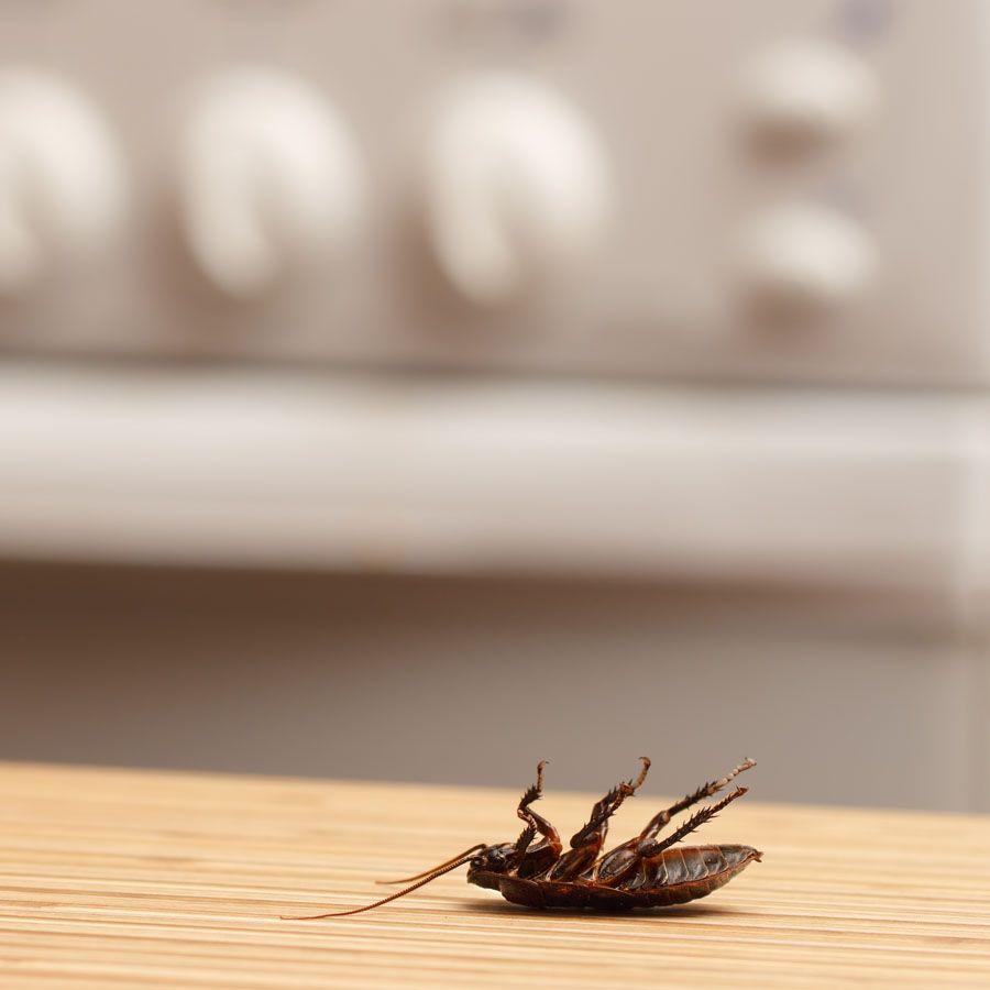 Control de plagas de cucarachas en Madrid