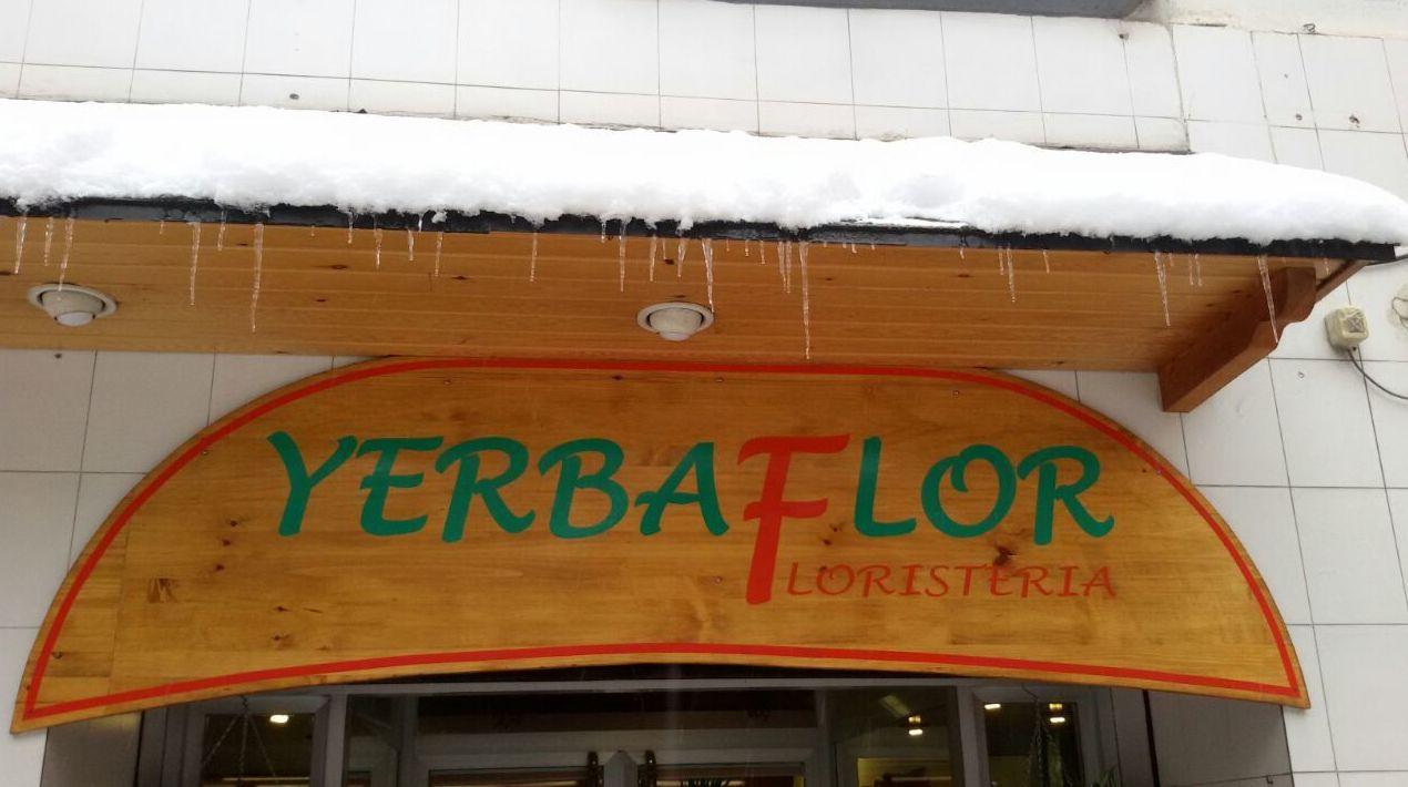 Foto 35 de Floristerías en Sabiñánigo | Yerbaflor