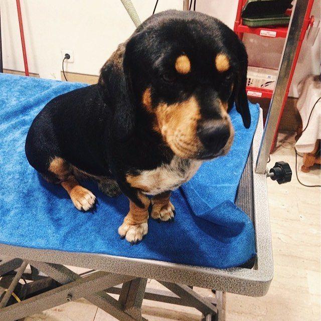 Peluquería canina: Productos y servicios de Perruqueria Canina Rex