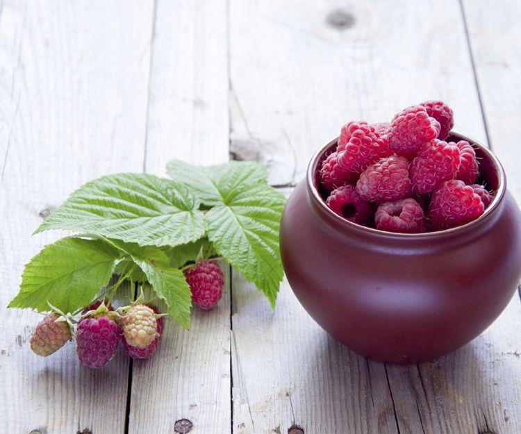 Venta de frutos rojos en Huelva