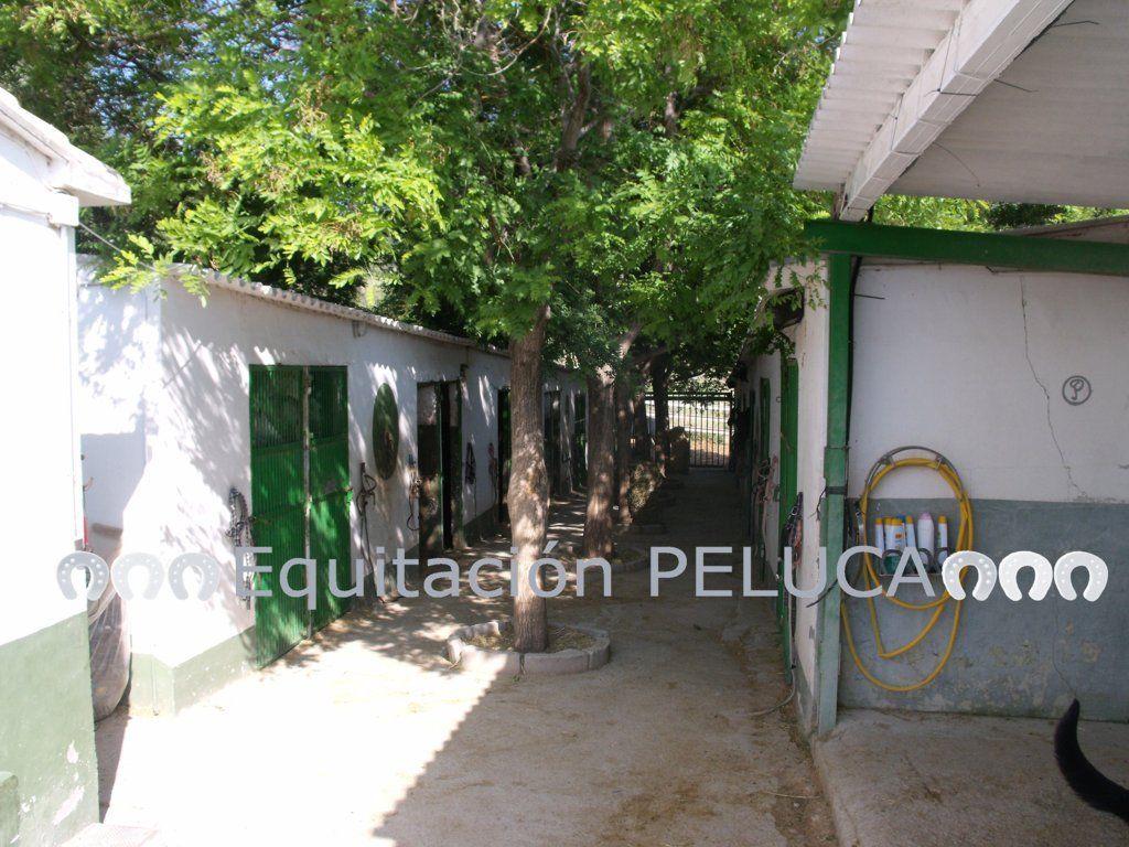 Visitas guiadas a caballo en la Comunidad Valenciana