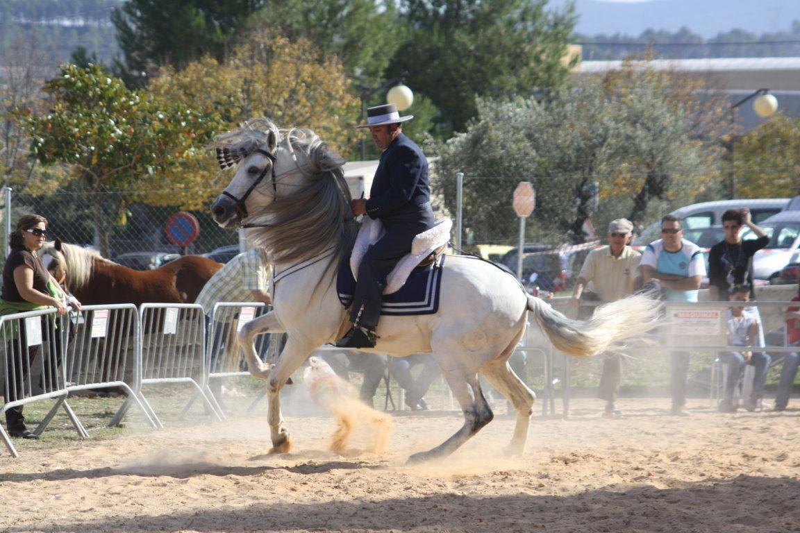 Escuela de equitación en la Comunidad Valenciana