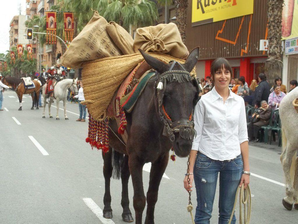Caballos para cabalgatas en la Comunidad Valenciana
