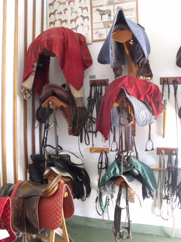 Disfruta de actividades a caballo en la Comunidad Valenciana