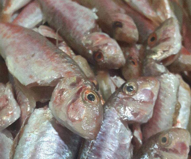 Pescados frescos en nuestros platos