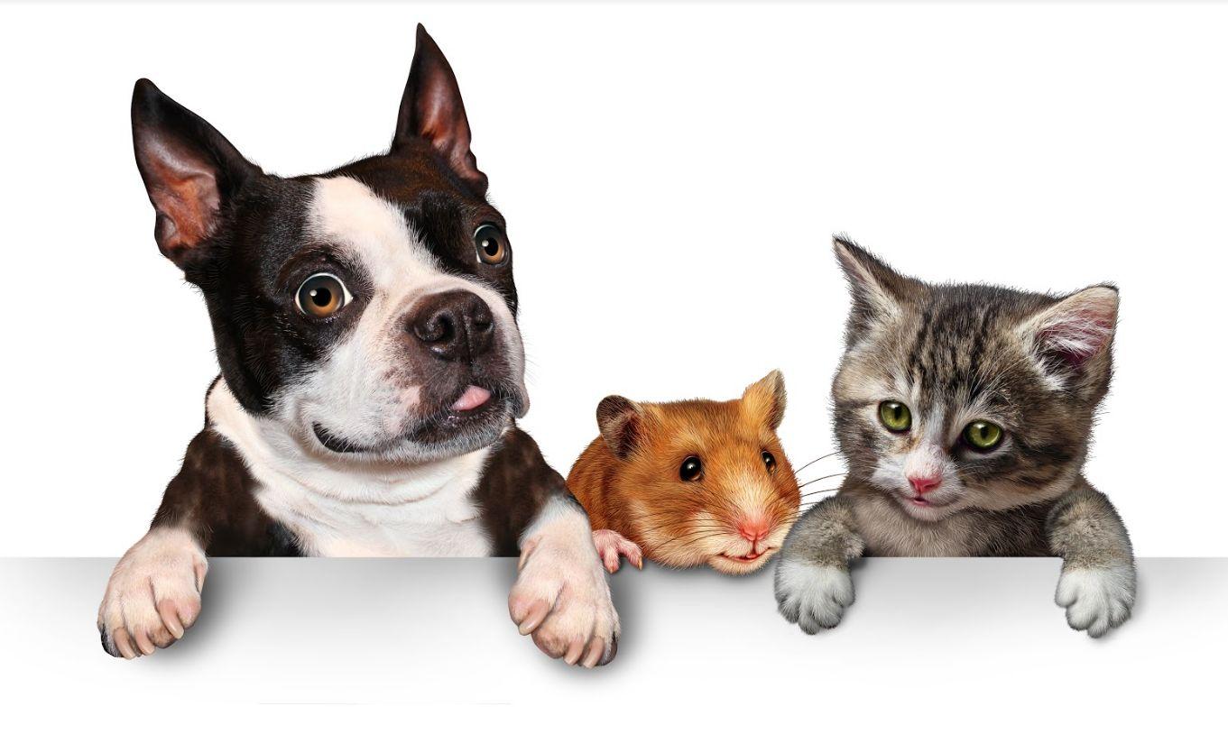 El mejor veterinario Getafe