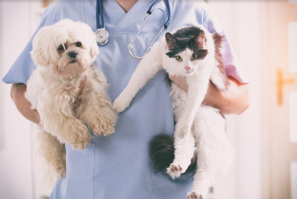 El mejor veterinario Leganés