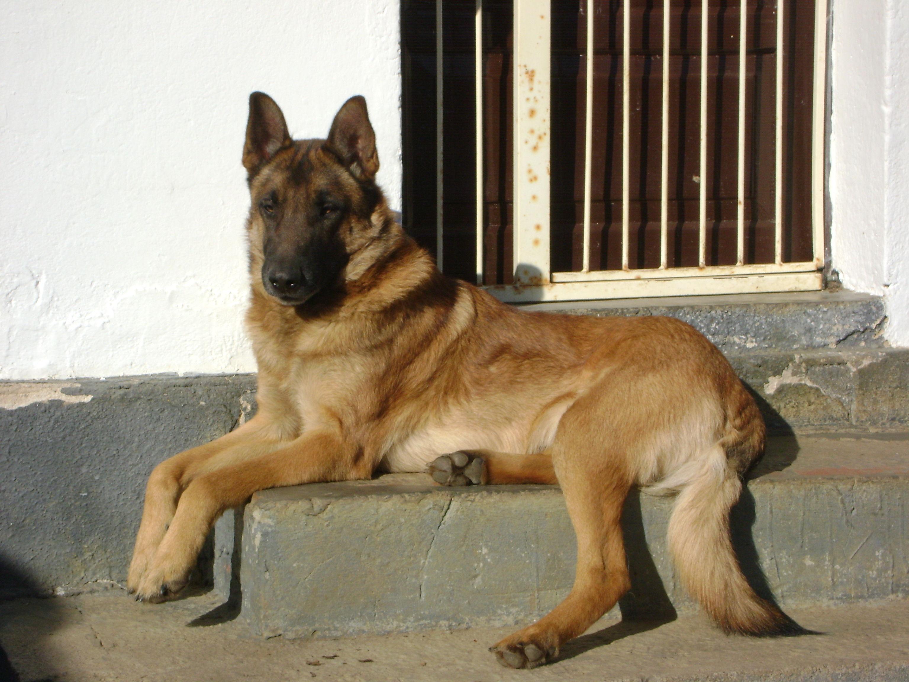 Nuestro perro KIBA