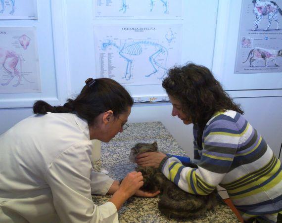 Foto 22 de Veterinarios urgencias 24horas en Oviedo | Centro Veterinario Ícaro