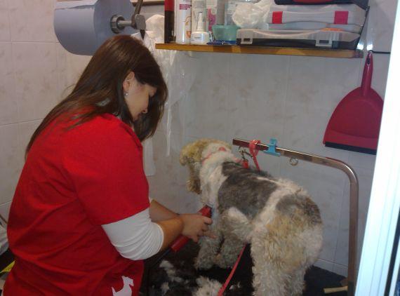 Foto 21 de Veterinarios urgencias 24horas en Oviedo | Centro Veterinario Ícaro