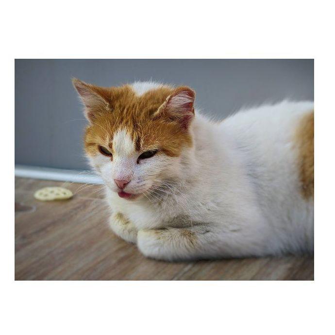 ¿Su gato vomita?
