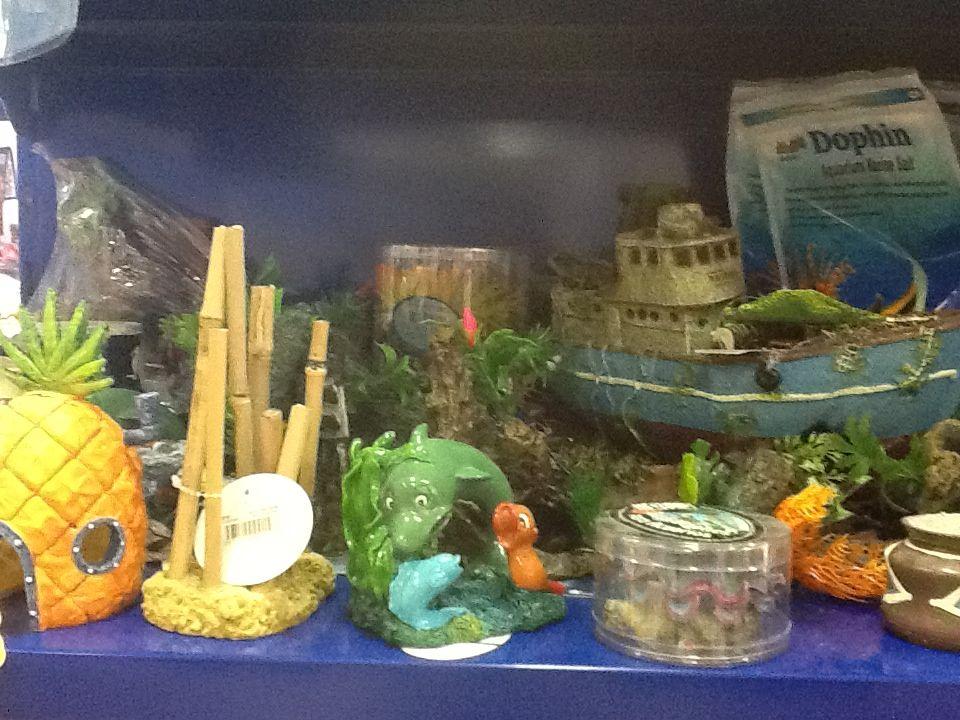 Tienda de animales asturias animales y accesorios de mila bierzoo - Decoracion para acuarios ...