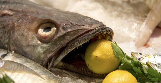 Pescado y marisco al por mayor en Las Palmas