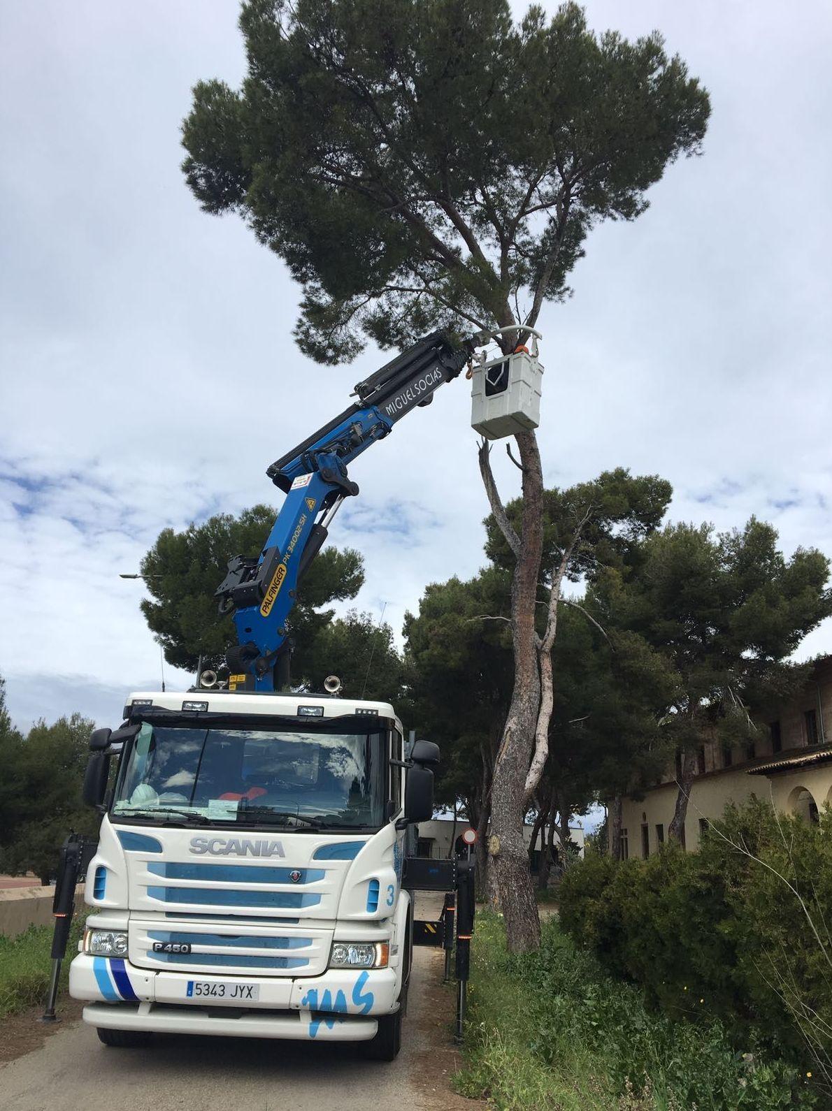 Foto 6 de Transporte y materiales de construcción en Campanet | Transportes Miguel Socias e Hijos