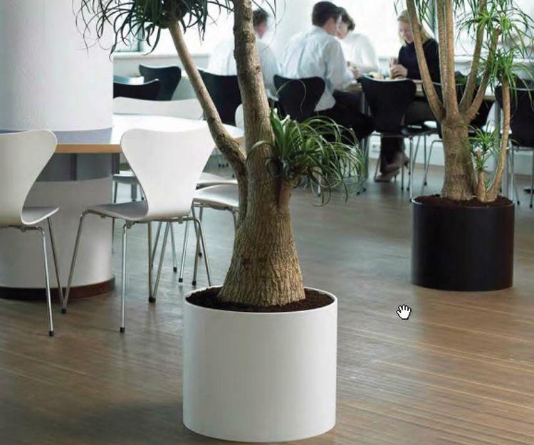 Plantas para interior en Cabrera de Mar, Barcelona