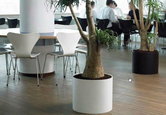 plantas hidroponicas para oficinas - disponemos de ejemplares de todos los tamaños