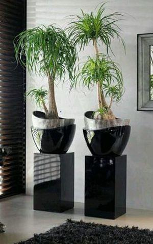 Jardineras hidrocultivo