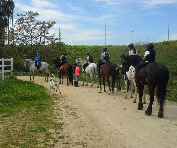 Clases de equitación en Sevilla