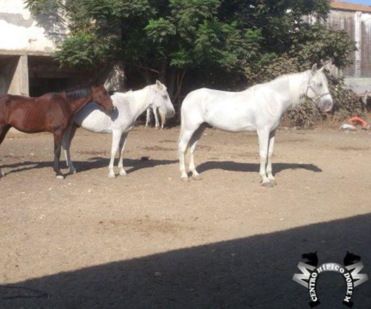 Paseos a caballo por el campo en Sevilla