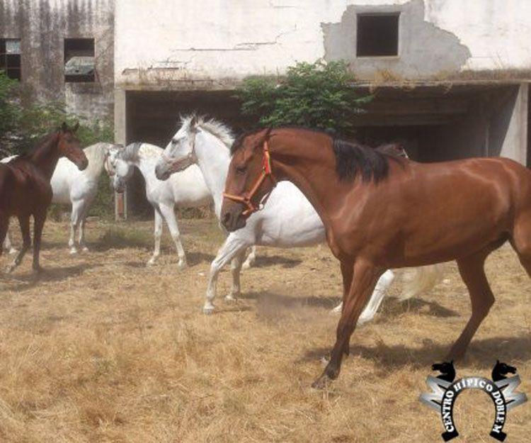 Clases de equitación profesionales en Sevilla