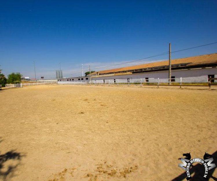 Clases de equitación para todos los niveles en Sevilla