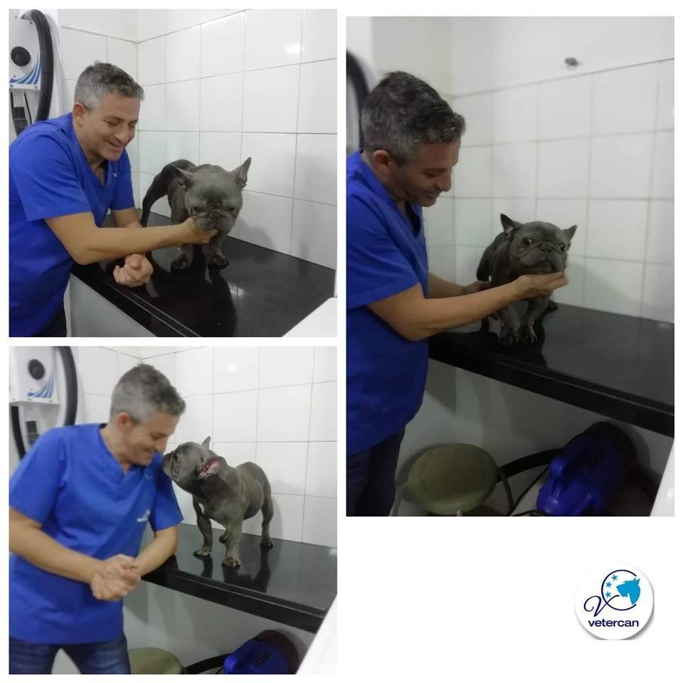 Foto 16 de Veterinarios en  | Vetercan